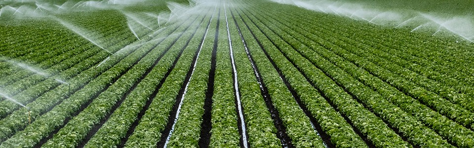 Irrigation system spraying crop field
